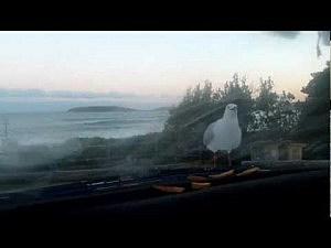 Stupid seagulls