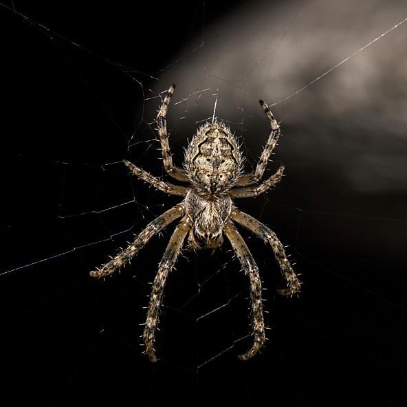 Spider photo