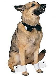 STRIPPER DOG CHIP N DALES COSTUME