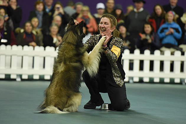 2016 Westminster Kennel Club Dog Show