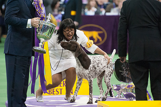 Annual Westminster Kennel Club Dog Show