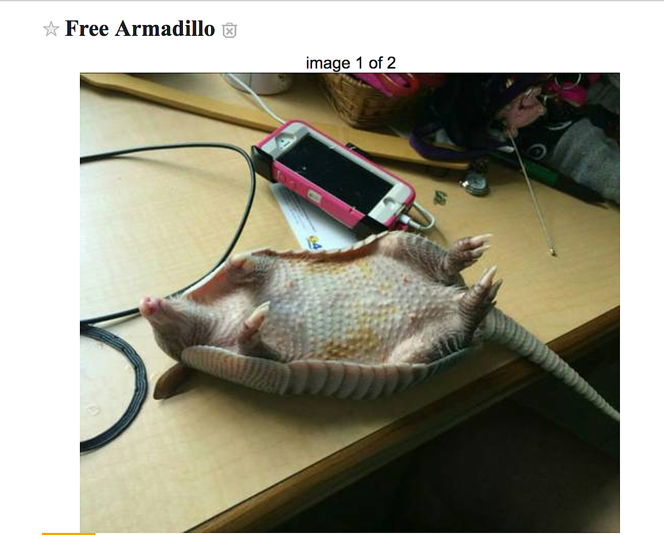 evansville craigslist, where you can find a free armadillo!