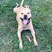 Wrigley was formerly an ACA dog (WKDQ)