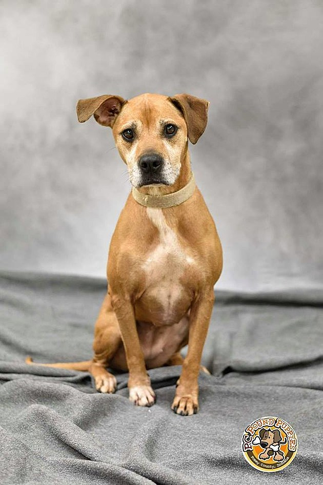 Clarissa is available for adoption through PC  Pound Puppies (Photo Credit: PC Pound Puppies)